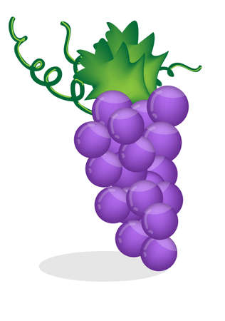 Grape isolated Stock Vector - 17163141