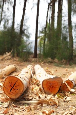 logging: Cut  tree logging