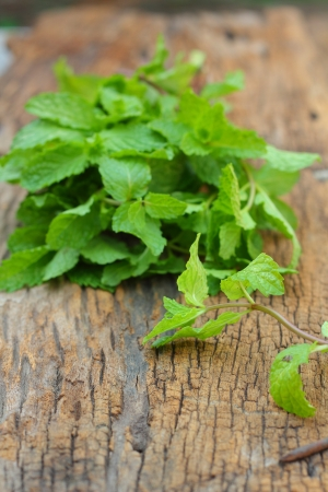 wild mint: Pepper mint leaves on old wood background