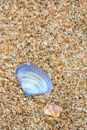 Shells on the beach  photo