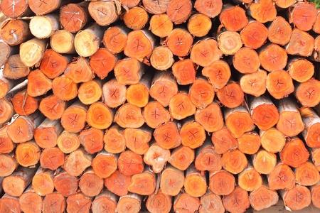 a pile of cut wood stump photo