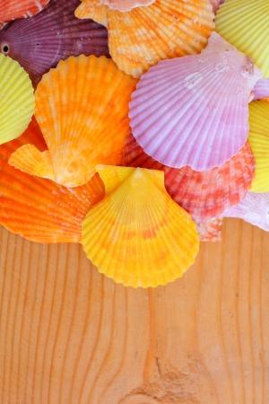 cockleshells: Cockleshells Stock Photo