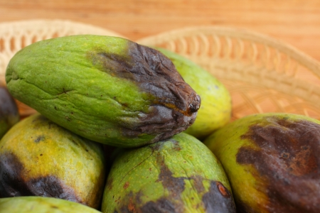 Rotten mango. Stock Photo
