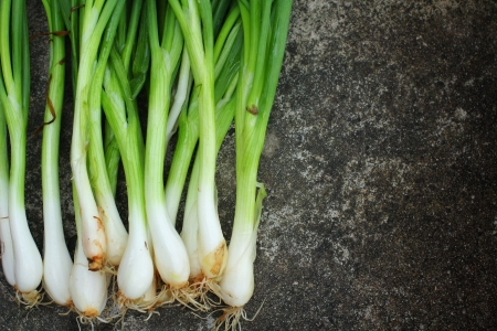 Spring onions on gray background