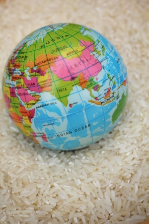 Close up of rice grain and globe photo