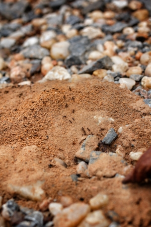 Ants nest and stone