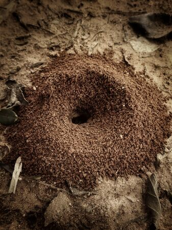 Ants nest in the nature photo