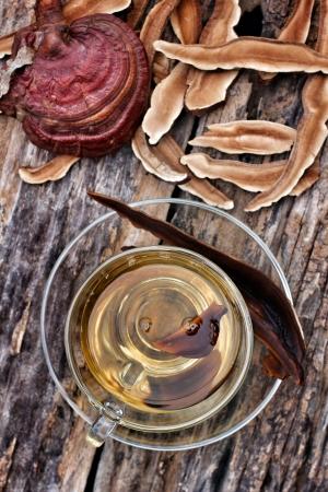 Ganoderma lucidum et une tasse de thé Banque d'images - 22884906