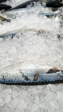 Fresh mackerel fish on ice photo