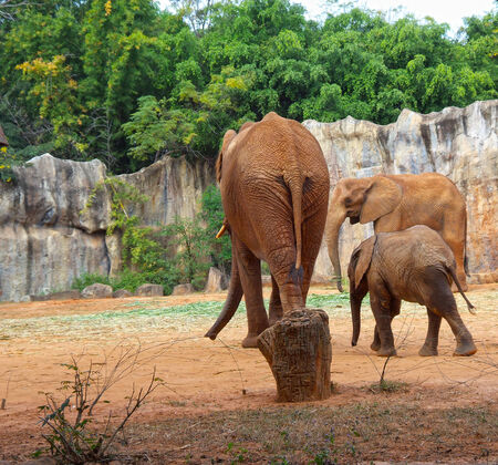 elephant family in the zoo photo