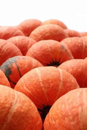 Harvest fresh pumpkin orange  in the farm - isolate photo