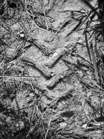 Wheel tracks on the soil. Stock Photo - 25144672