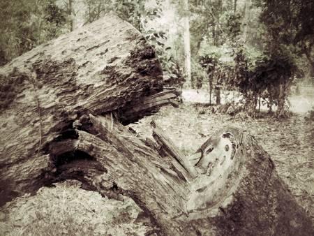 logging: Cut tree logging.