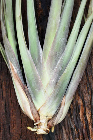 Close up of lemon grass photo