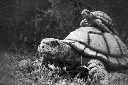 land turtle: Mom and baby crawling tortoise in the nature
