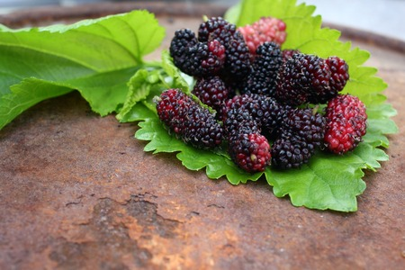 Close up of ripe mulberry.