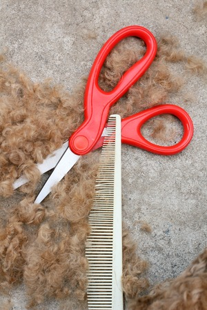 Tool of dog hair cut Stock Photo - 27045676