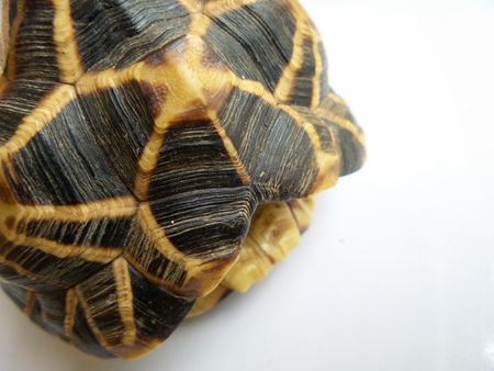 Turtle carapace background texture