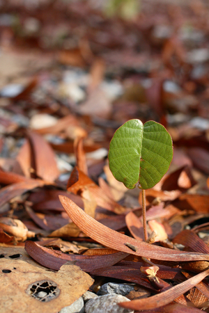 ides: Young plant in the forest.