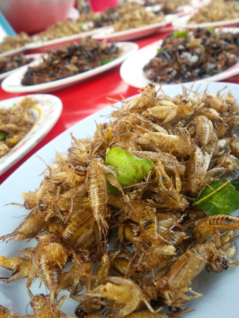 cricket insect: fried cricket insect