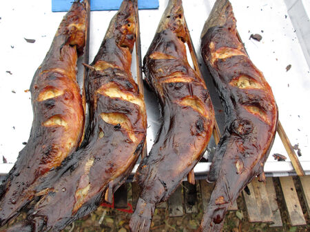 BBQ fish  photo