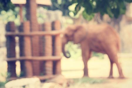 blurred of elephant photo