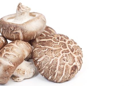 Shiitake mushrooms isolated