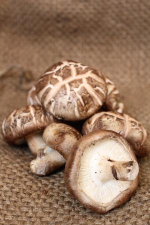 Shiitake mushrooms 版權商用圖片