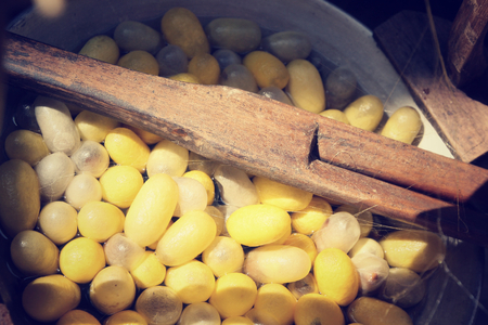 silkworm: Cocoon silkworm Stock Photo