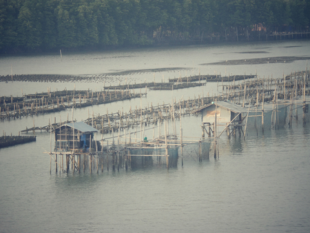 fisheries: Shell farming - fisheries in sea