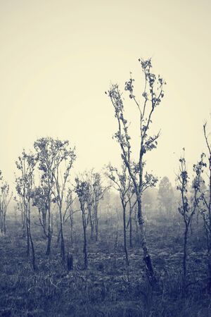bushfire: Forest after a bushfire Stock Photo