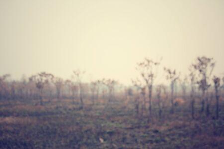 bushfire: Blurred of forest after a bushfire