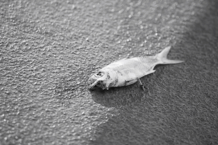 bullhead fish: Dead fish on the beach