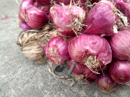 cebolla roja: Chalota - cebolla roja asia