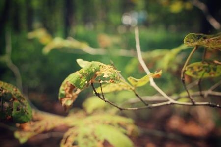 hojas antiguas: Deja vieja con insectos Foto de archivo