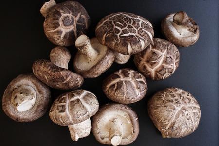 Shiitake mushrooms Standard-Bild