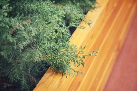 descriptive colours: Pine tree