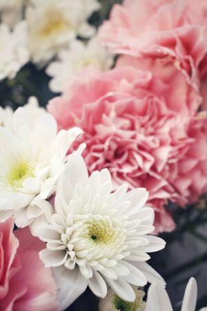 carnations: Carnations flower
