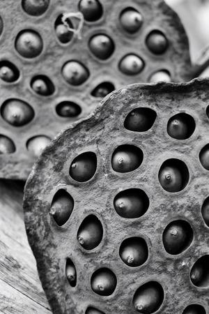 lotus seeds: Dried lotus seeds