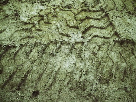 muddy tracks: Wheel tracks on the soil.