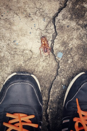 revolting: Selfie of shoes with cockroach