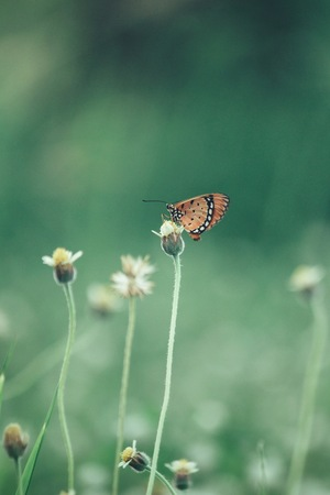 grass  flowers: Butterfly with grass flowers Stock Photo