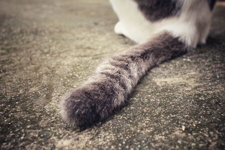 furry tail: Tail of a cat