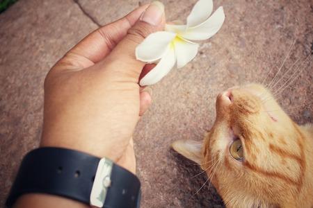 gato jugando: Gato que juega con la mano