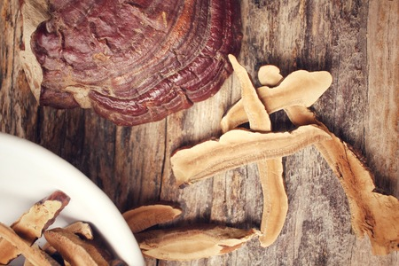 lucidum: Ganoderma lucidum - Ling zhi mushroom.
