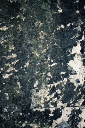 algae: Algae on stone Stock Photo