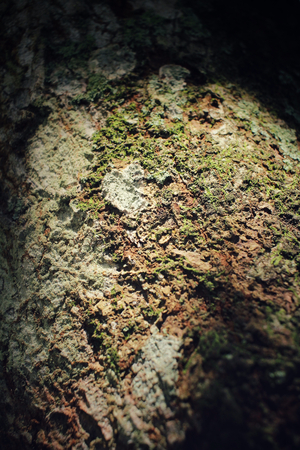 liquen: Lichen with shodow Foto de archivo