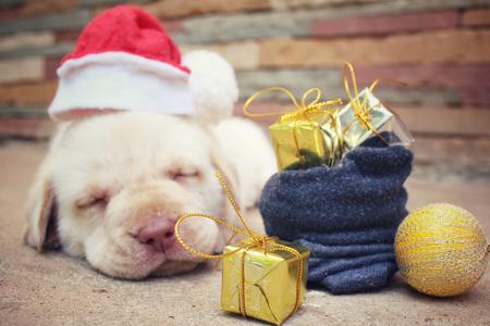perros graciosos: Perro de la Navidad con el sombrero y el regalo