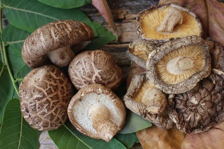 Shiitake mushroom Stock Photo