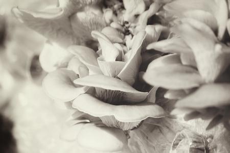 mycelium: Mushroom.